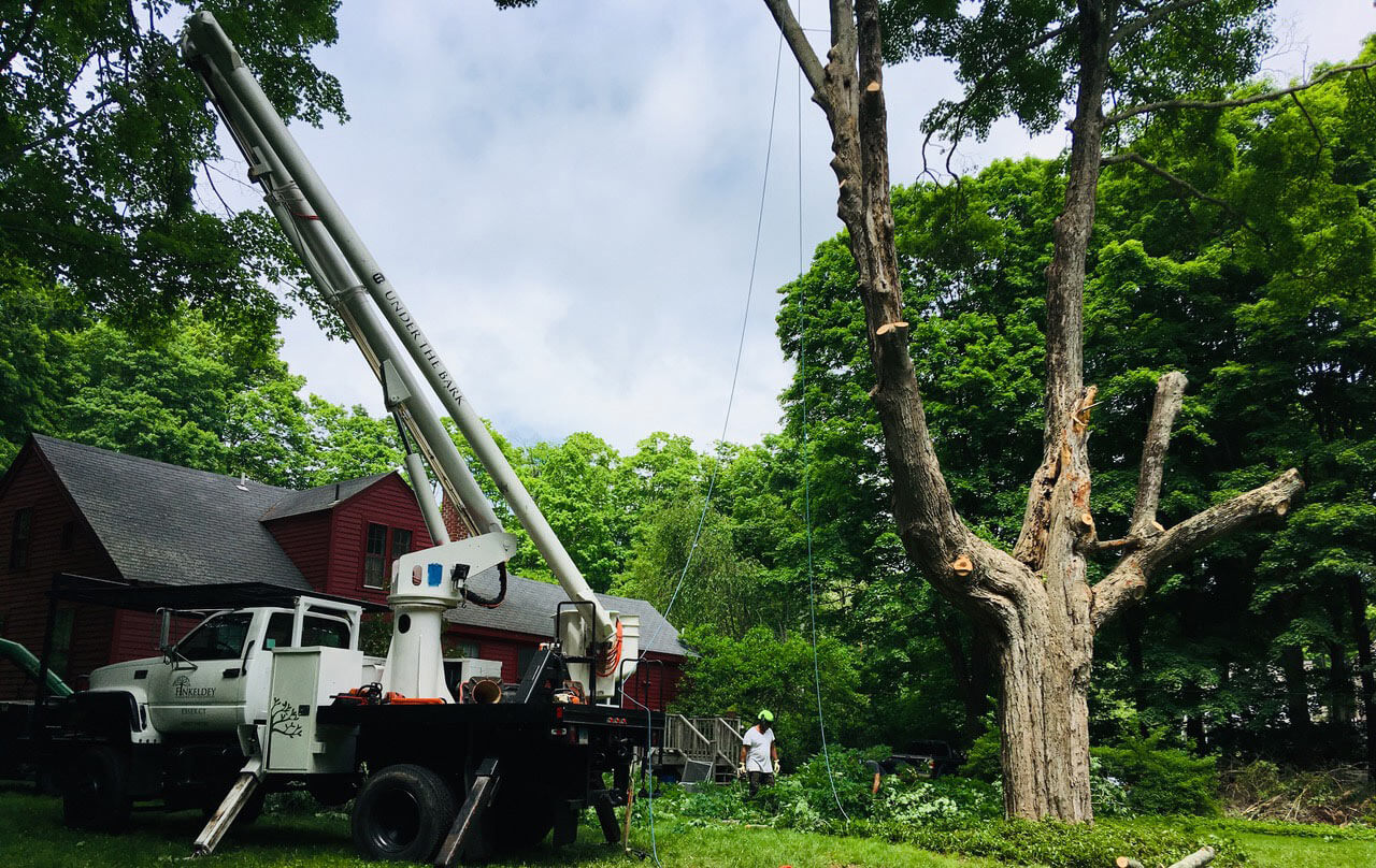 Commercial Tree Services-Boca Raton Tree Trimming and Tree Removal Services-We Offer Tree Trimming Services, Tree Removal, Tree Pruning, Tree Cutting, Residential and Commercial Tree Trimming Services, Storm Damage, Emergency Tree Removal, Land Clearing, Tree Companies, Tree Care Service, Stump Grinding, and we're the Best Tree Trimming Company Near You Guaranteed!