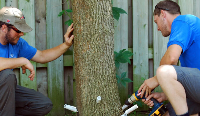 Deep Root Injection-Boca Raton Tree Trimming and Tree Removal Services-We Offer Tree Trimming Services, Tree Removal, Tree Pruning, Tree Cutting, Residential and Commercial Tree Trimming Services, Storm Damage, Emergency Tree Removal, Land Clearing, Tree Companies, Tree Care Service, Stump Grinding, and we're the Best Tree Trimming Company Near You Guaranteed!