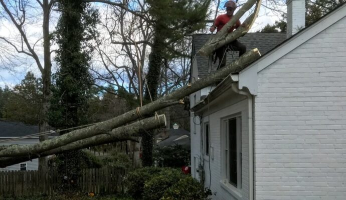 Emergency Tree Removal-Boca Raton Tree Trimming and Tree Removal Services-We Offer Tree Trimming Services, Tree Removal, Tree Pruning, Tree Cutting, Residential and Commercial Tree Trimming Services, Storm Damage, Emergency Tree Removal, Land Clearing, Tree Companies, Tree Care Service, Stump Grinding, and we're the Best Tree Trimming Company Near You Guaranteed!