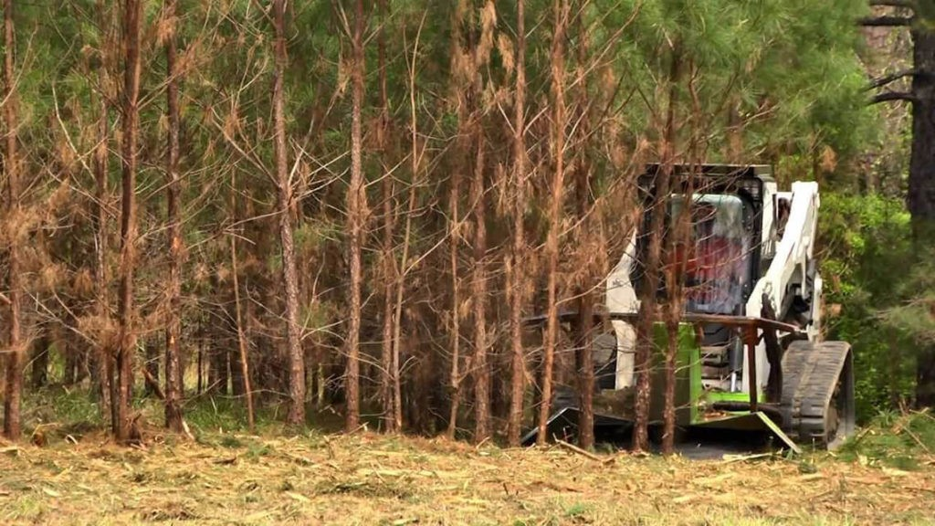 Land Clearing copy-Boca Raton Tree Trimming and Tree Removal Services-We Offer Tree Trimming Services, Tree Removal, Tree Pruning, Tree Cutting, Residential and Commercial Tree Trimming Services, Storm Damage, Emergency Tree Removal, Land Clearing, Tree Companies, Tree Care Service, Stump Grinding, and we're the Best Tree Trimming Company Near You Guaranteed!