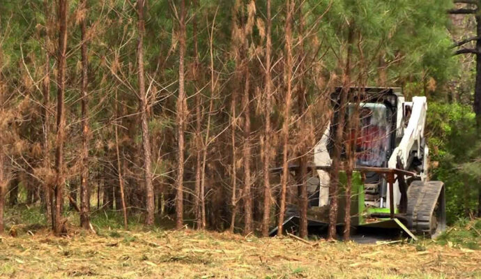 Land Clearing -Boca Raton Tree Trimming and Tree Removal Services-We Offer Tree Trimming Services, Tree Removal, Tree Pruning, Tree Cutting, Residential and Commercial Tree Trimming Services, Storm Damage, Emergency Tree Removal, Land Clearing, Tree Companies, Tree Care Service, Stump Grinding, and we're the Best Tree Trimming Company Near You Guaranteed!