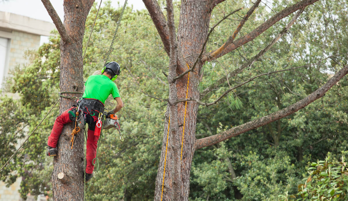 Residential Tree Services-Boca Raton Tree Trimming and Tree Removal Services-We Offer Tree Trimming Services, Tree Removal, Tree Pruning, Tree Cutting, Residential and Commercial Tree Trimming Services, Storm Damage, Emergency Tree Removal, Land Clearing, Tree Companies, Tree Care Service, Stump Grinding, and we're the Best Tree Trimming Company Near You Guaranteed!