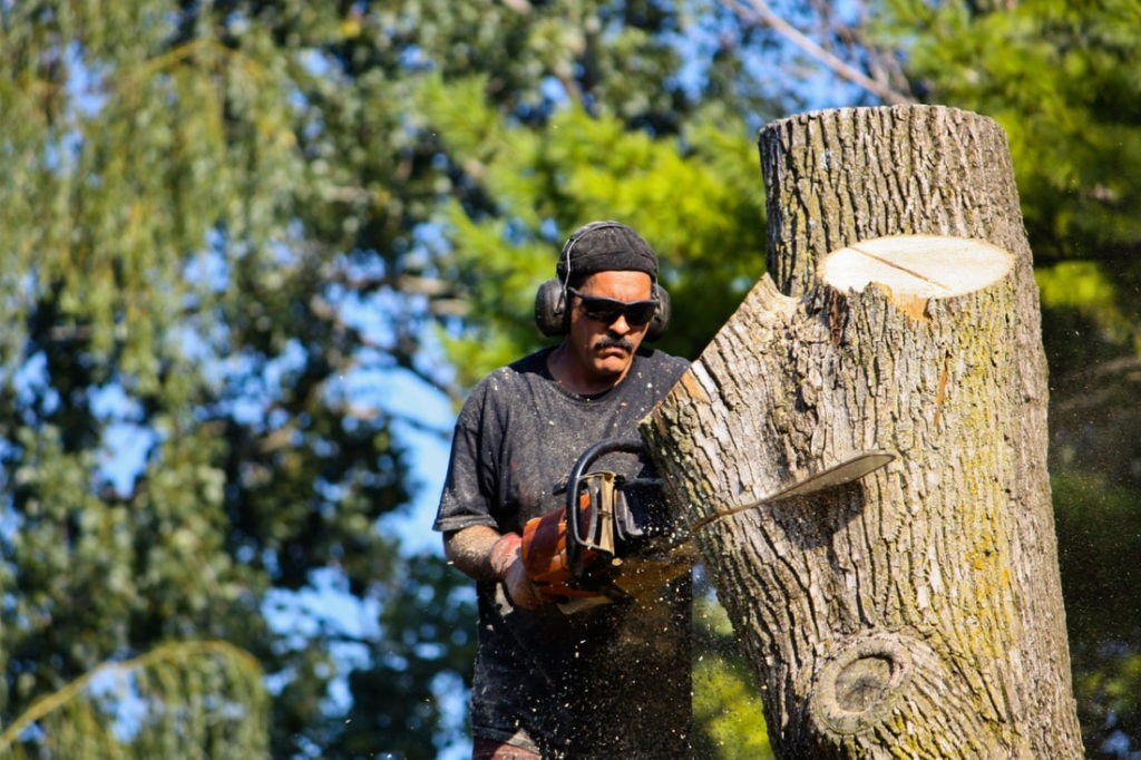 Tree Cutting-Boca Raton Tree Trimming and Tree Removal Services-We Offer Tree Trimming Services, Tree Removal, Tree Pruning, Tree Cutting, Residential and Commercial Tree Trimming Services, Storm Damage, Emergency Tree Removal, Land Clearing, Tree Companies, Tree Care Service, Stump Grinding, and we're the Best Tree Trimming Company Near You Guaranteed!
