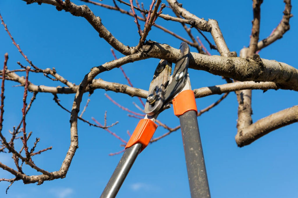 Tree Pruning-Boca Raton Tree Trimming and Tree Removal Services-We Offer Tree Trimming Services, Tree Removal, Tree Pruning, Tree Cutting, Residential and Commercial Tree Trimming Services, Storm Damage, Emergency Tree Removal, Land Clearing, Tree Companies, Tree Care Service, Stump Grinding, and we're the Best Tree Trimming Company Near You Guaranteed!