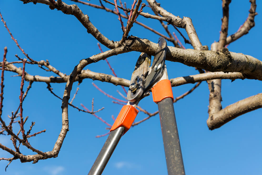 Tree Pruning & Tree Removal-Boca Raton Tree Trimming and Tree Removal Services-We Offer Tree Trimming Services, Tree Removal, Tree Pruning, Tree Cutting, Residential and Commercial Tree Trimming Services, Storm Damage, Emergency Tree Removal, Land Clearing, Tree Companies, Tree Care Service, Stump Grinding, and we're the Best Tree Trimming Company Near You Guaranteed!