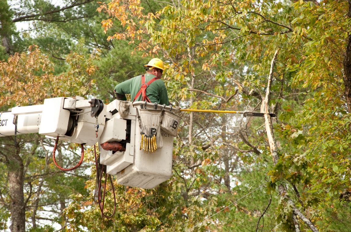 Tree Trimming-Boca Raton Tree Trimming and Tree Removal Services-We Offer Tree Trimming Services, Tree Removal, Tree Pruning, Tree Cutting, Residential and Commercial Tree Trimming Services, Storm Damage, Emergency Tree Removal, Land Clearing, Tree Companies, Tree Care Service, Stump Grinding, and we're the Best Tree Trimming Company Near You Guaranteed!